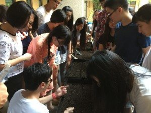 Planting herbs in the College courtyard. 在書院庭院種植香料作物。