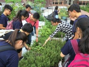 Students leaned to observe the growing condition of the herbs in the rooftop farm. 同學們俯身觀察香草的種植狀況。